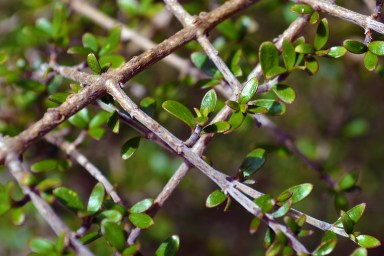 New leaves on a bush