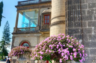 Blooming flowers, Mexico city