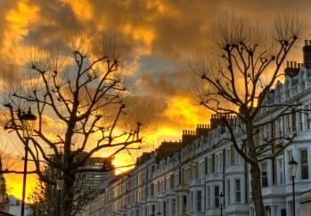 Trees at sunset, Earl's Court, London
