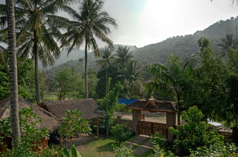 Palm Trees and Green Hills