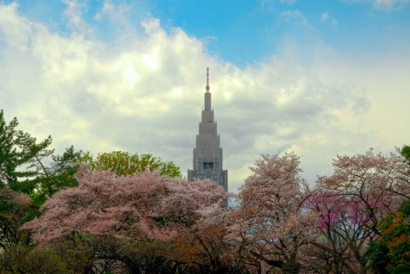 NTT building with Cherry Blossoms