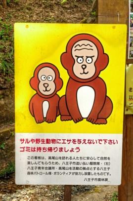 Warning! Very Cute Monkeys!