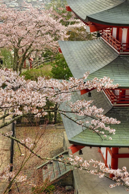 Cherry blossoms by Pagoda