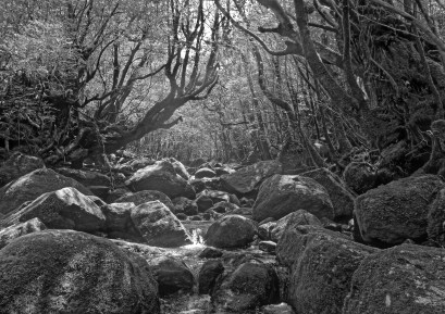 Black and White photo of a rocky river scene in the forest on Yakushima island, Japan