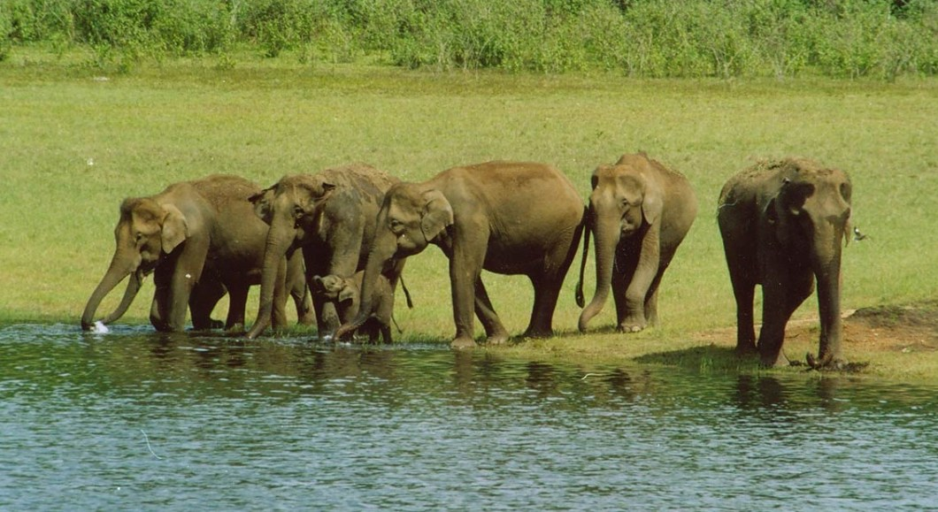 Periyar Wildlife Sanctuary - Top 10 Places To Visit In Kerala