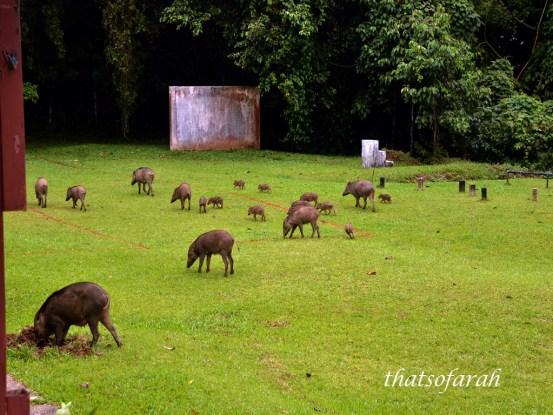 Taman Negara Pahang