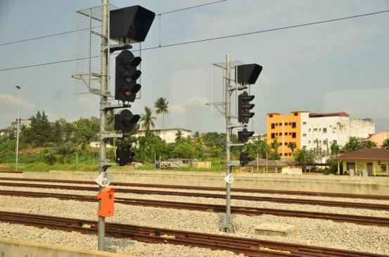 Jungle Train Track