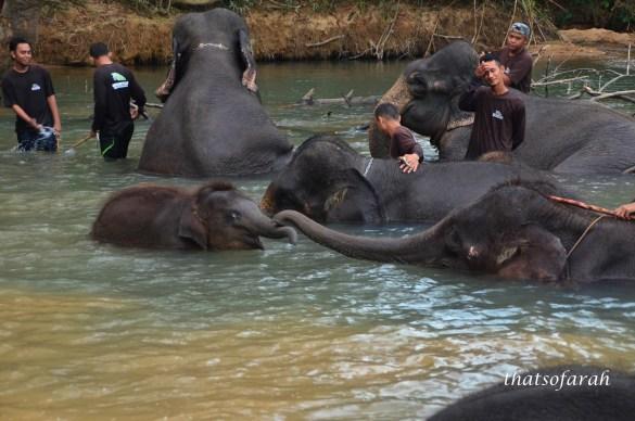 Kenyir Elephant Sanctuary