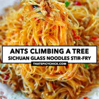 "Chopsticks holding up noodles and pork above a plate with stir-fried noodles. Text overlay ""Ants Climbing A Tree"", ""Sichuan Glass Noodles Stir-fry"", and ""thatspicychick.com""."