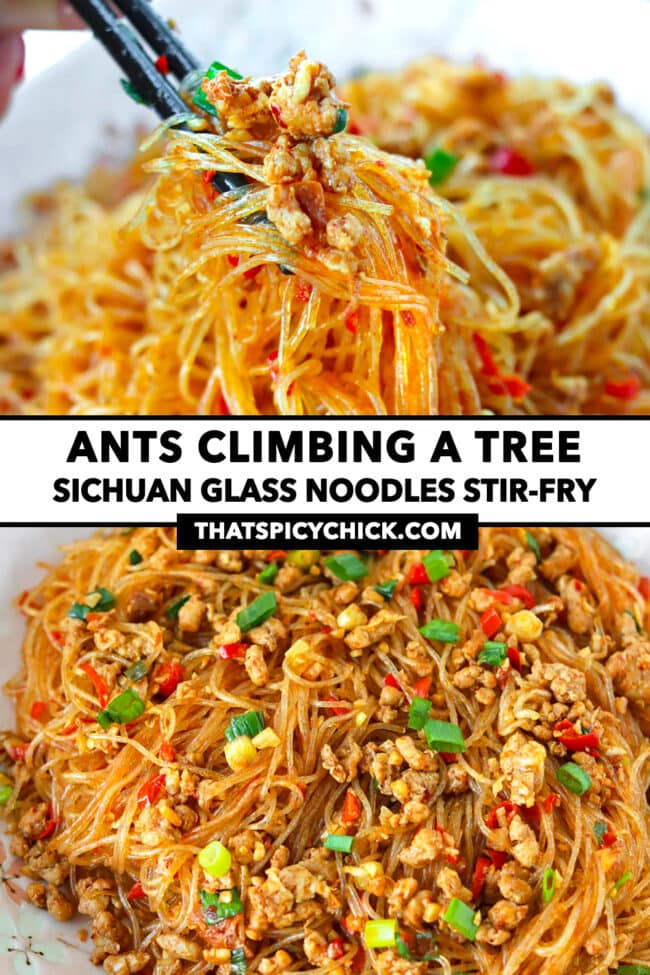 "Chopsticks holding up noodles and pork and front view of stir-fried pork noodles on a plate. Text overlay ""Ants Climbing A Tree"", ""Sichuan Glass Noodles Stir-fry"", and ""thatspicychick.com""."