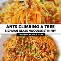 "Chopsticks holding up noodles and pork, and top view of stir-fried pork noodles on a plate. Text overlay ""Ants Climbing A Tree"", ""Sichuan Glass Noodles Stir-fry"", and ""thatspicychick.com""."