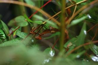 Zoo-bugs2