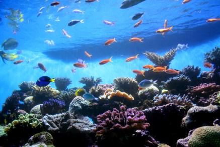 Birch-Aquarium-4