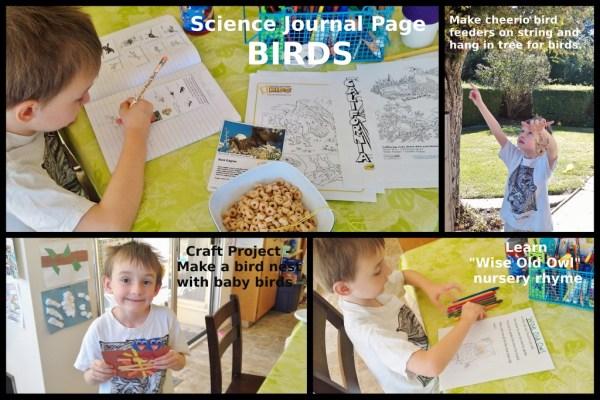 Birds (1024x683)