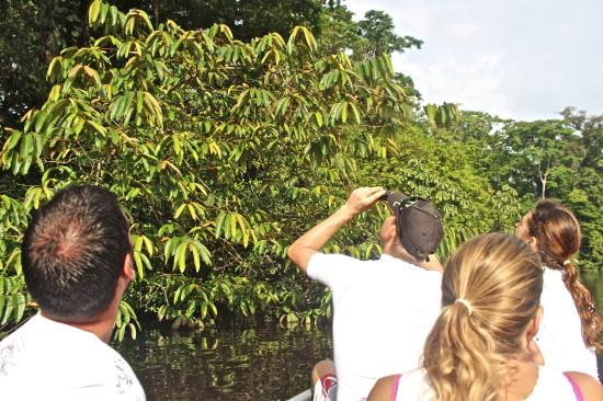 Spotting monkeys up in the trees