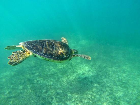turtle_akumal_gopro-mexico