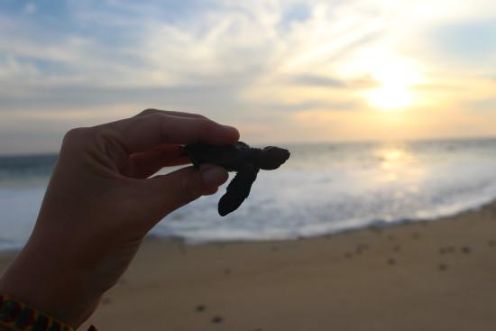 Baby sea turtle release in puerto escondido that wanderlust sea turtles mexico puerto escondido release publicscrutiny Image collections
