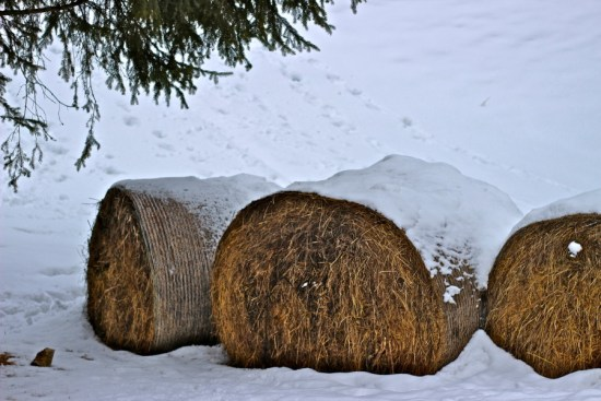 hay bales in canazei
