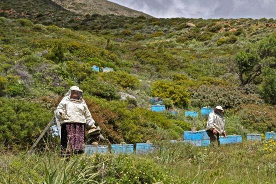 beekeepers-karpathos-traditional-travel-greece visit Karpathos