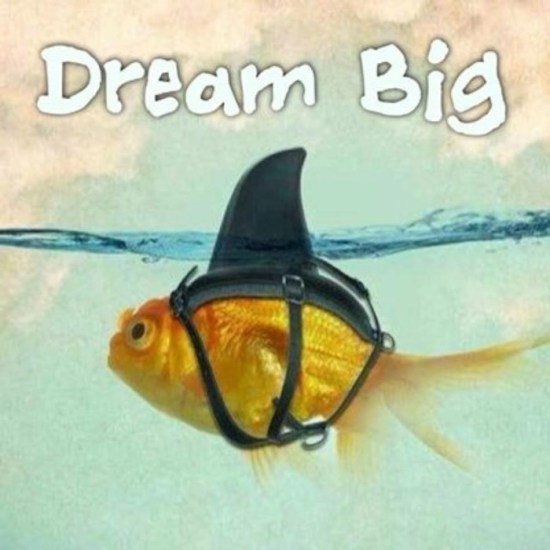 dreambig-idc-playadelcarmen-diving-padi