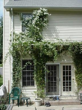 Pergola To Garage With Vines Thayer Amp Reed