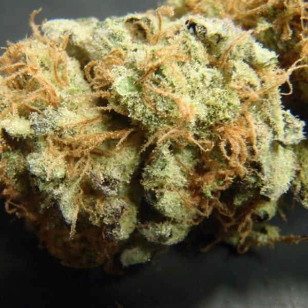 Buy northern lights weed | #1 best northern lights weed strain