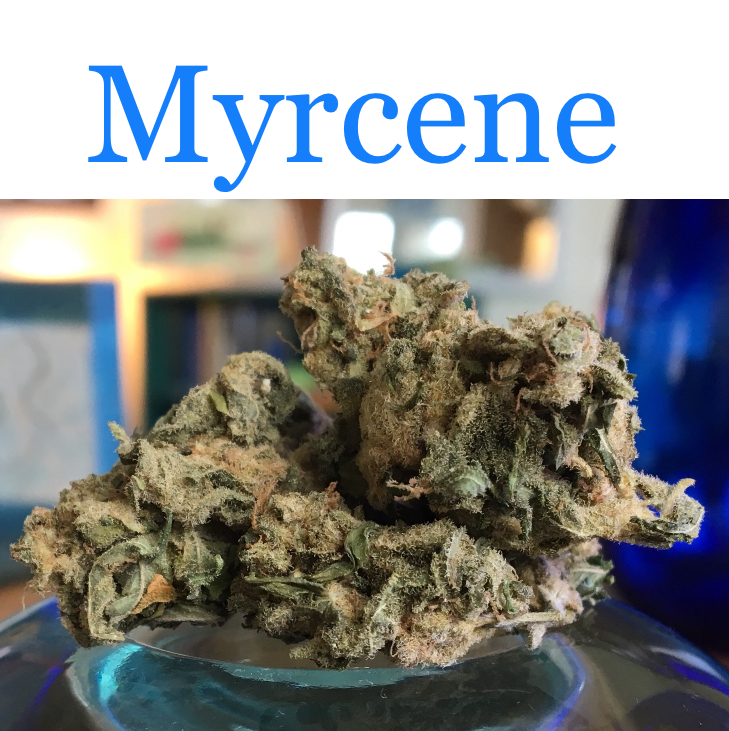 ACDC is a strain that's high in the cannabis terpene myrcene.