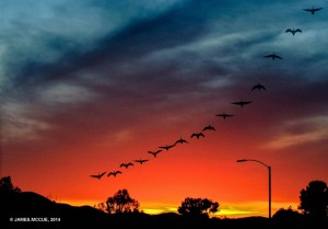 "James McCue ""Geese Over Hemet"""