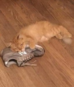 Po with Shoe