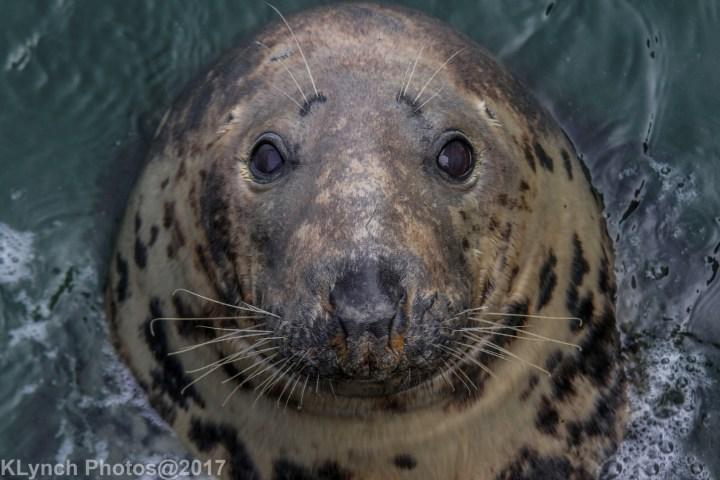 seal_70a