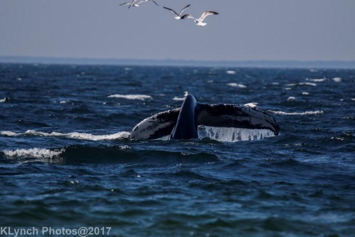 5 WhaleA_74