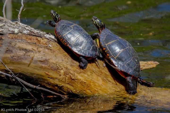06 turtles_4
