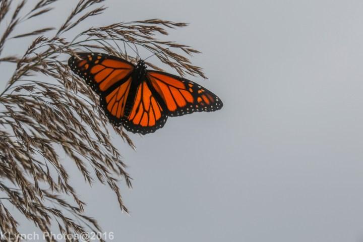 16 butterflys_2