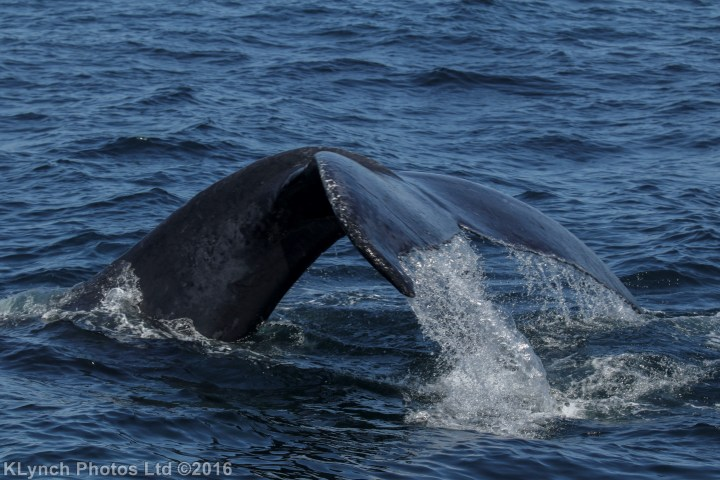04 whales_54 (1)