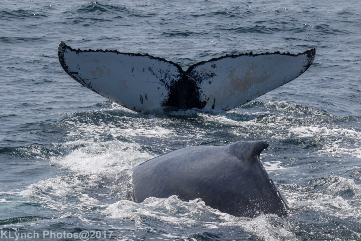 13 whale_170