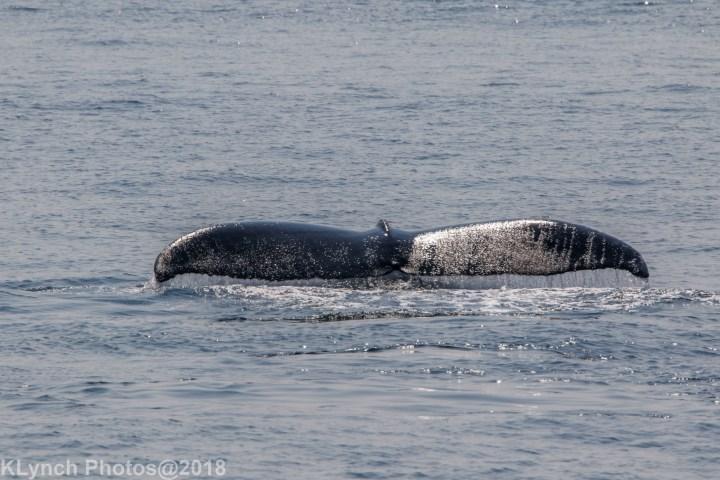 19 Whale_8 (1)