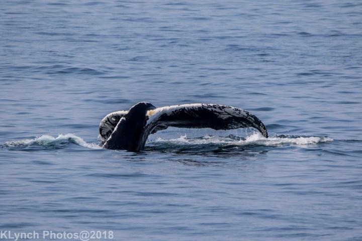22 Whale_8 (3)