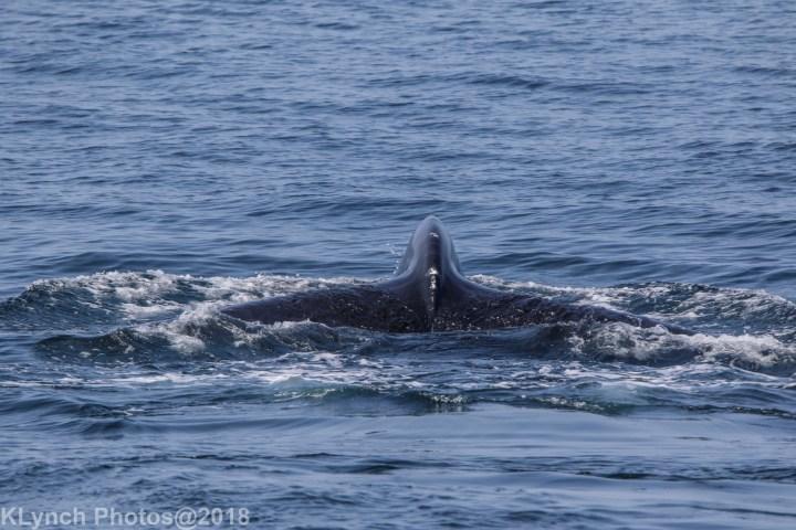 24 Whale_85