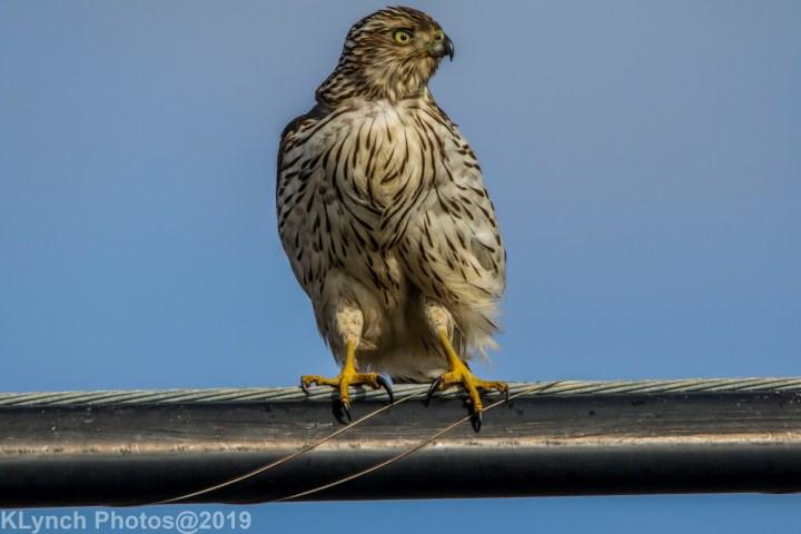 02 Hawk
