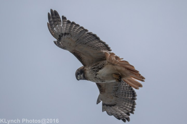 06 hawk