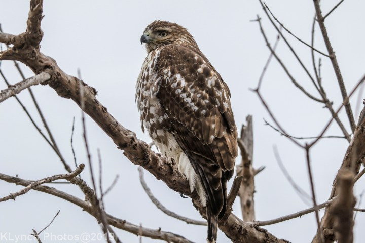 10 Hawk