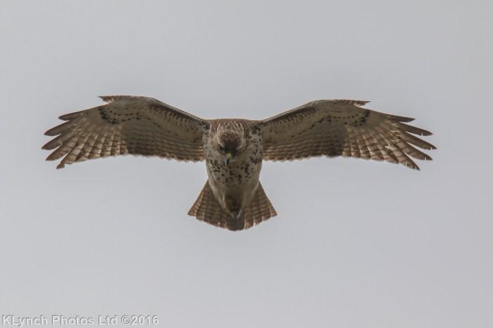 15 Hawk