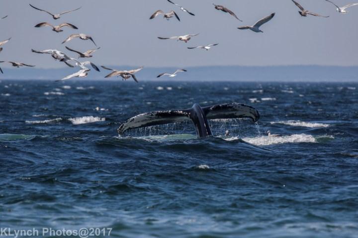 03a whales