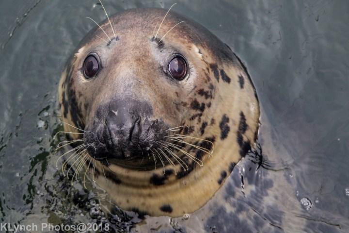 05 seal