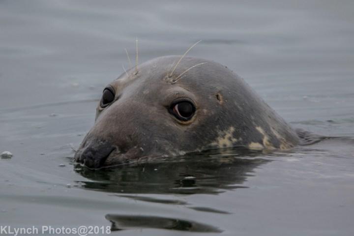 06 seal