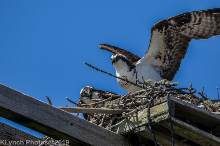 08 osprey