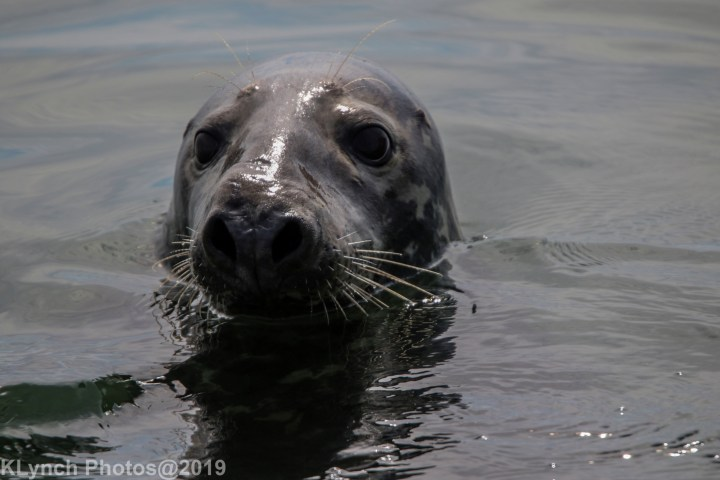 08 seal