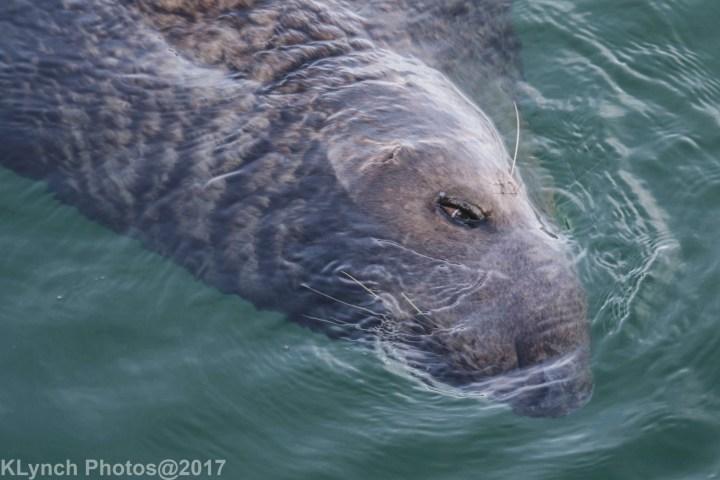 17 seal