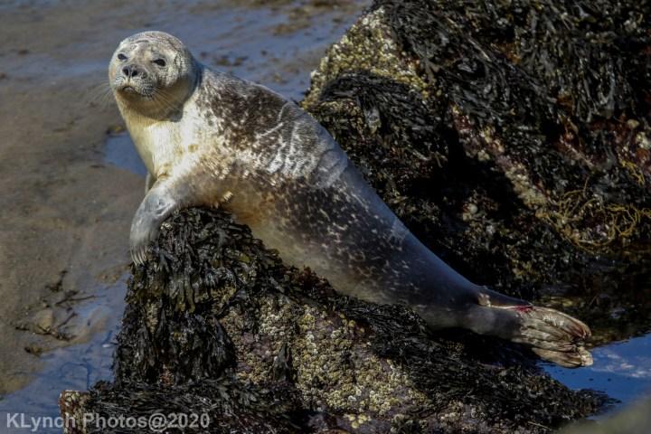 22 Seal