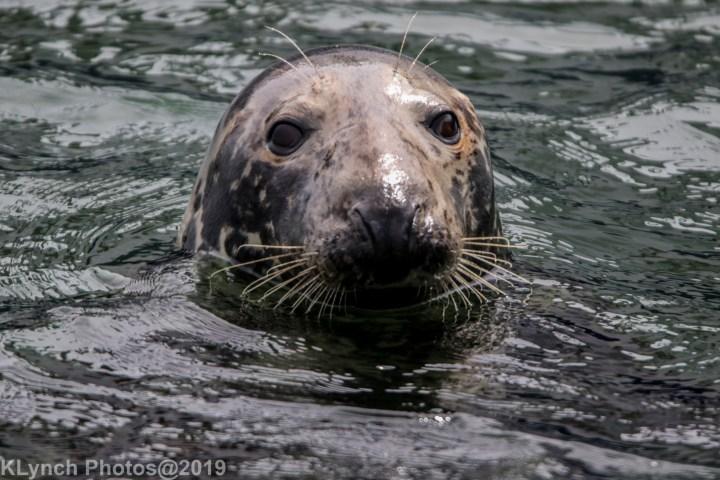25 seal